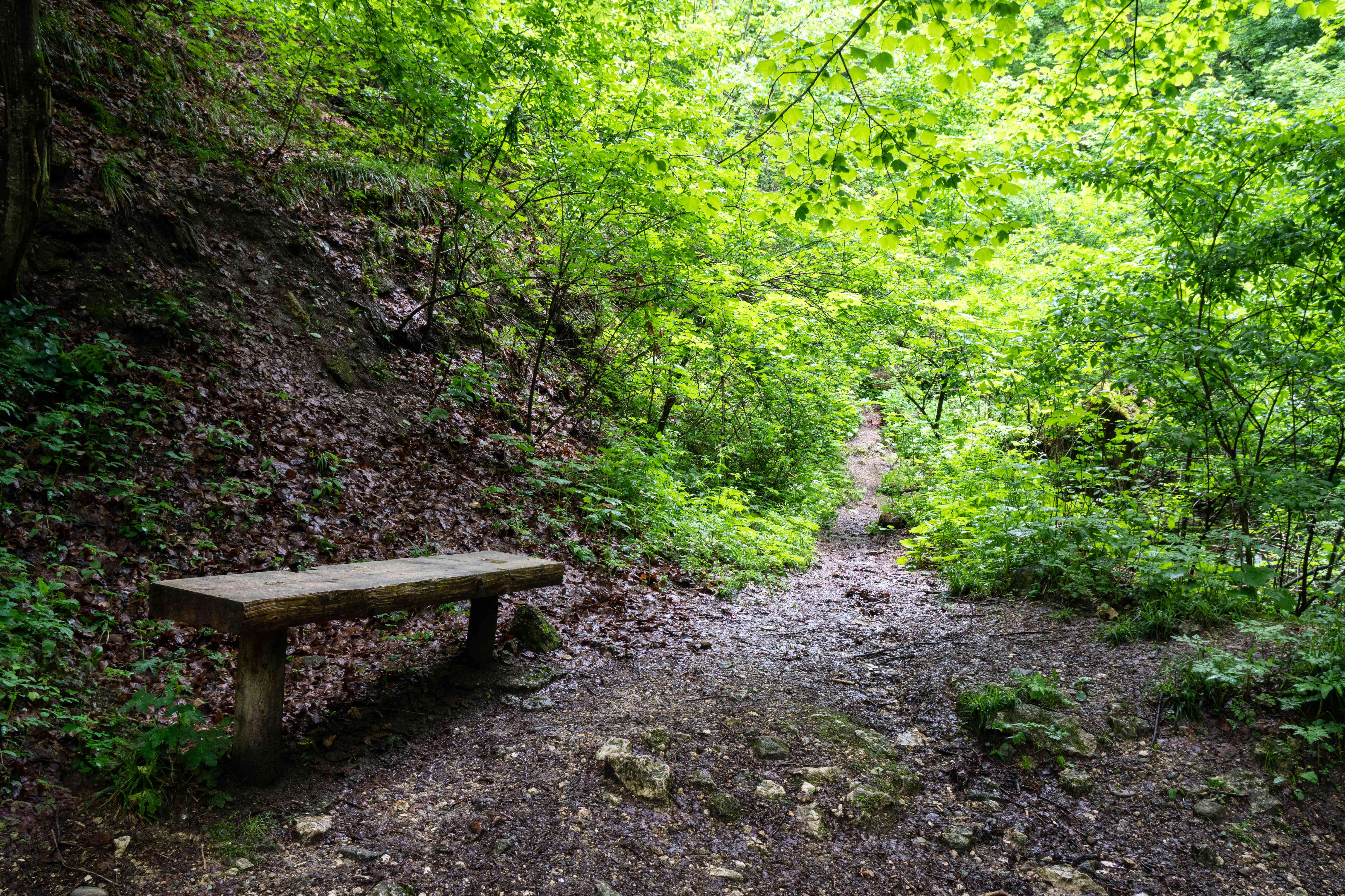 lone park bench on muddy path in middle of forest clearing