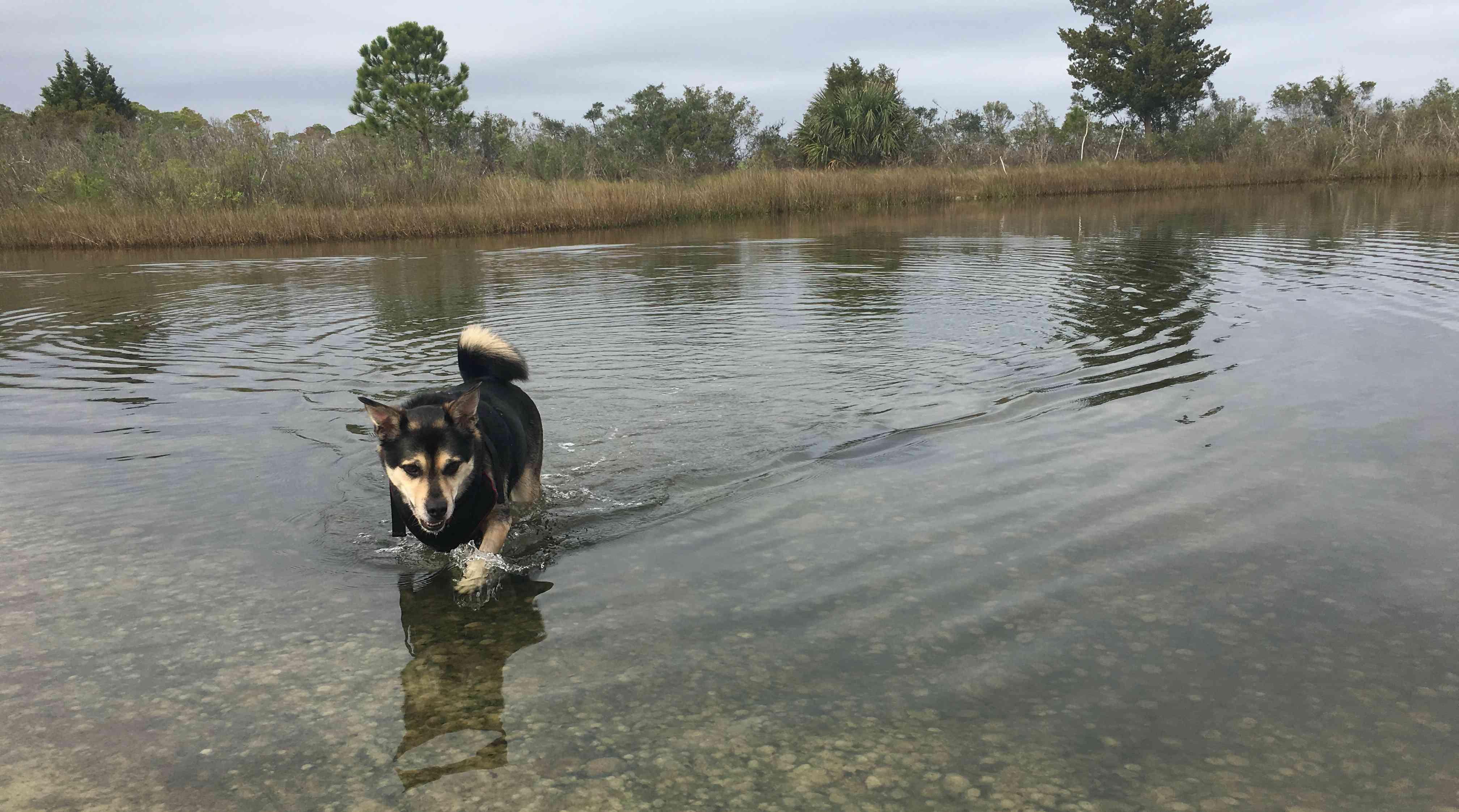 Otis, a mixed-breed rescue dog, fishing