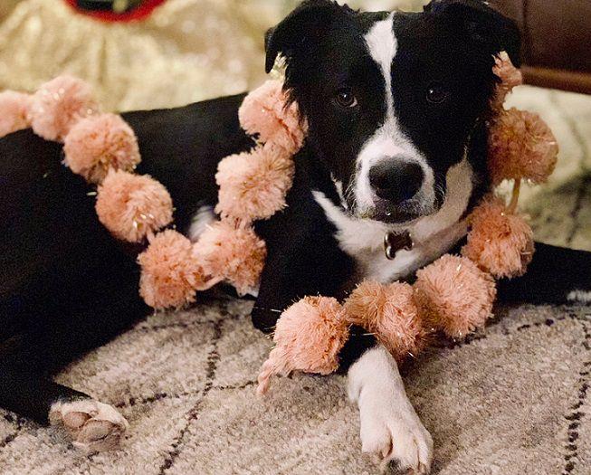 rescue dog Stanna