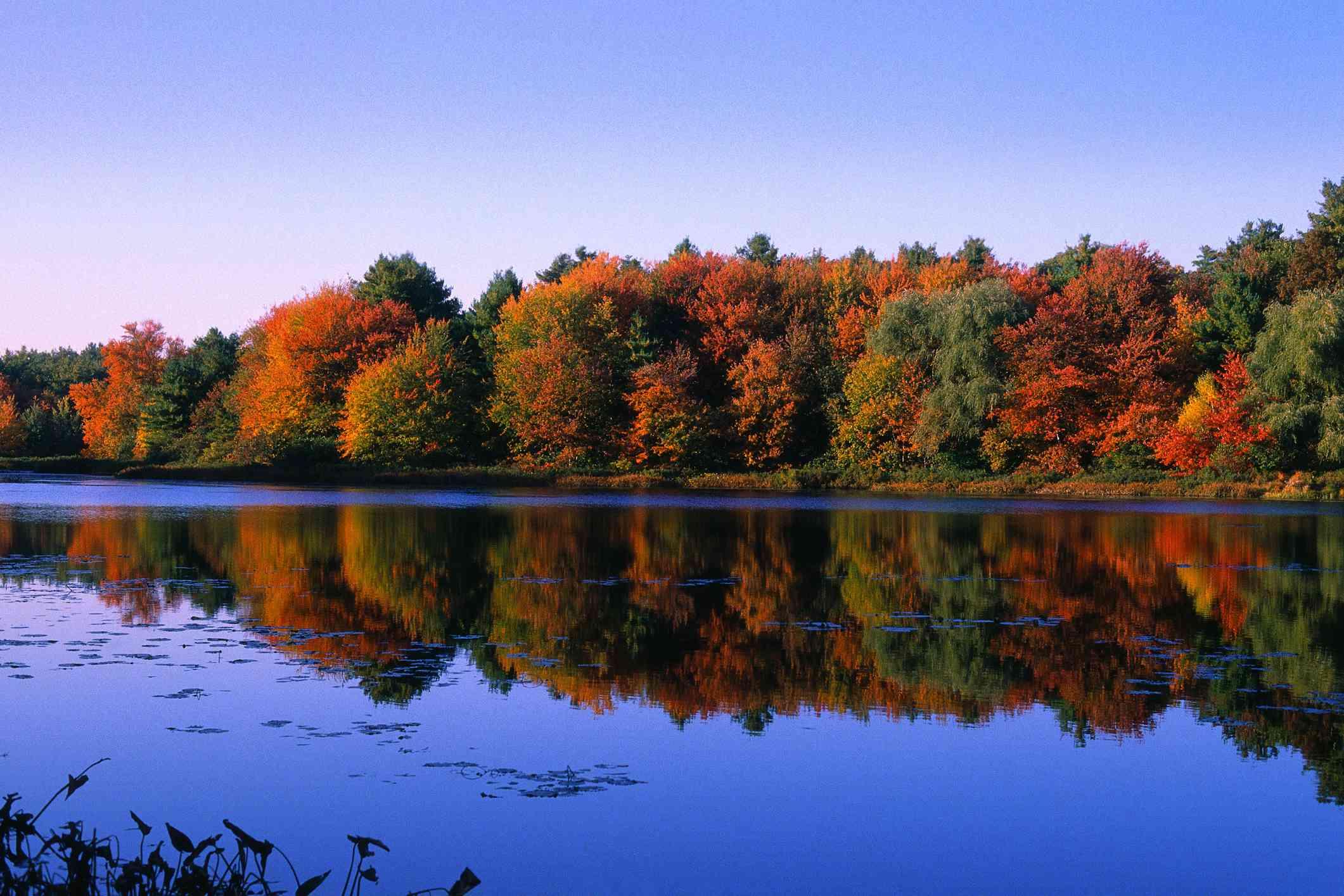 Autumn on Walden Pond