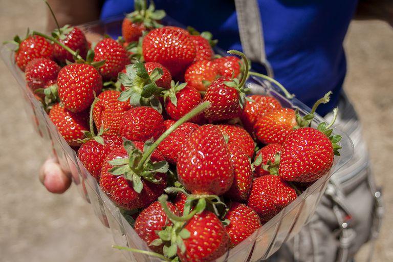 La industria de la fresa está a punto de cambiar para siempre