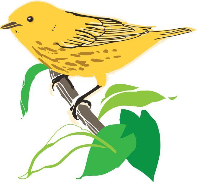 An illustration of a warbler