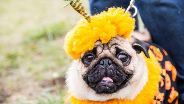 Una guía de sentido común para vestir a su mascota