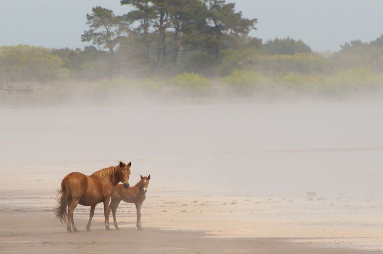 Two horses standing on sand on a foggy day