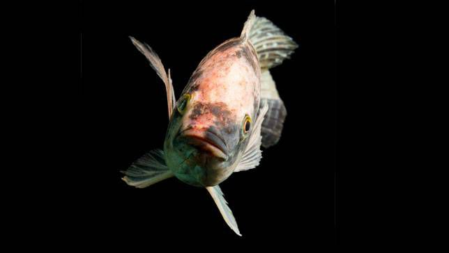 Pesca o piscicultura: ¿cuál es más responsable?