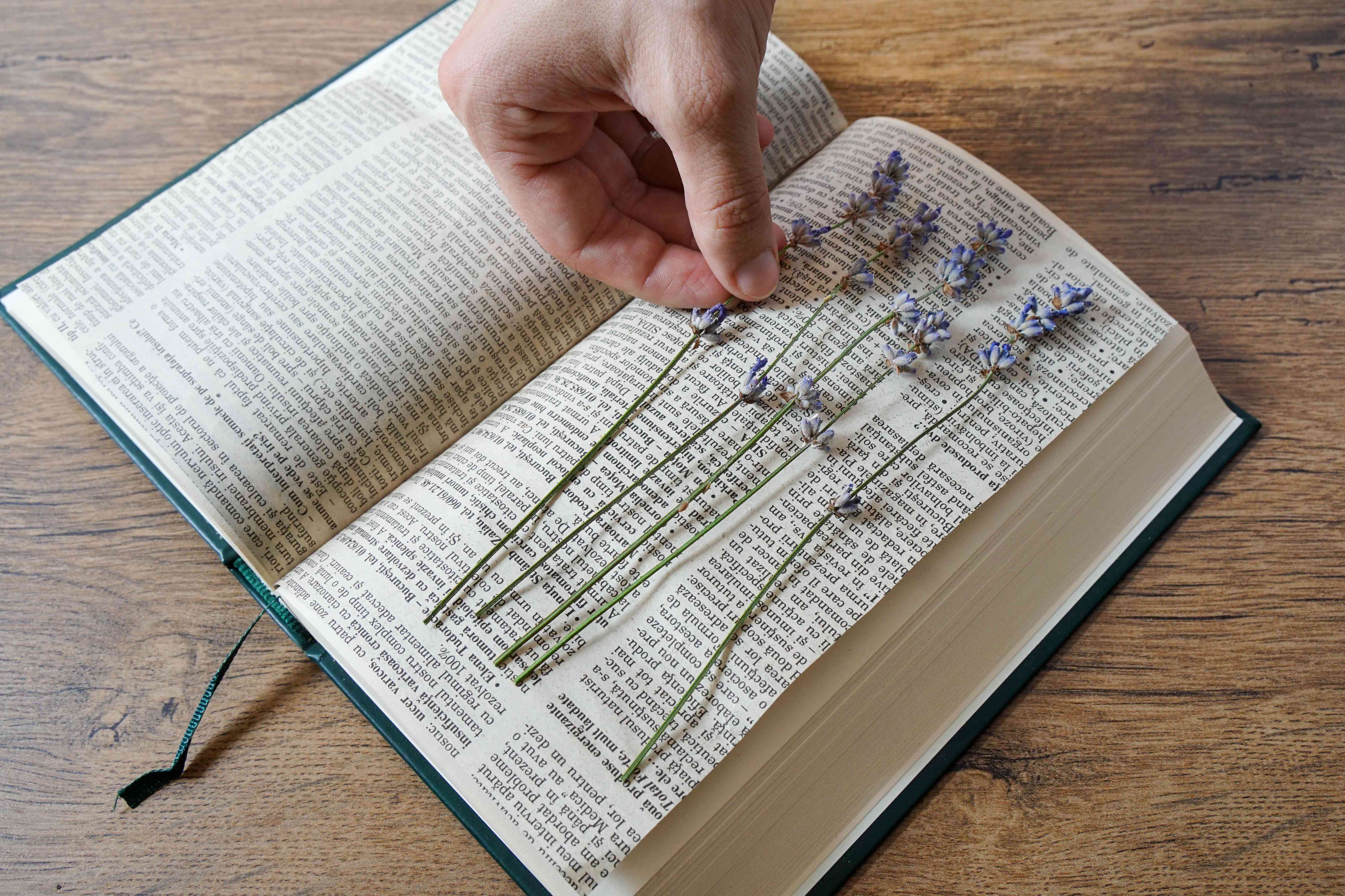 hand places lavender sprig in open book
