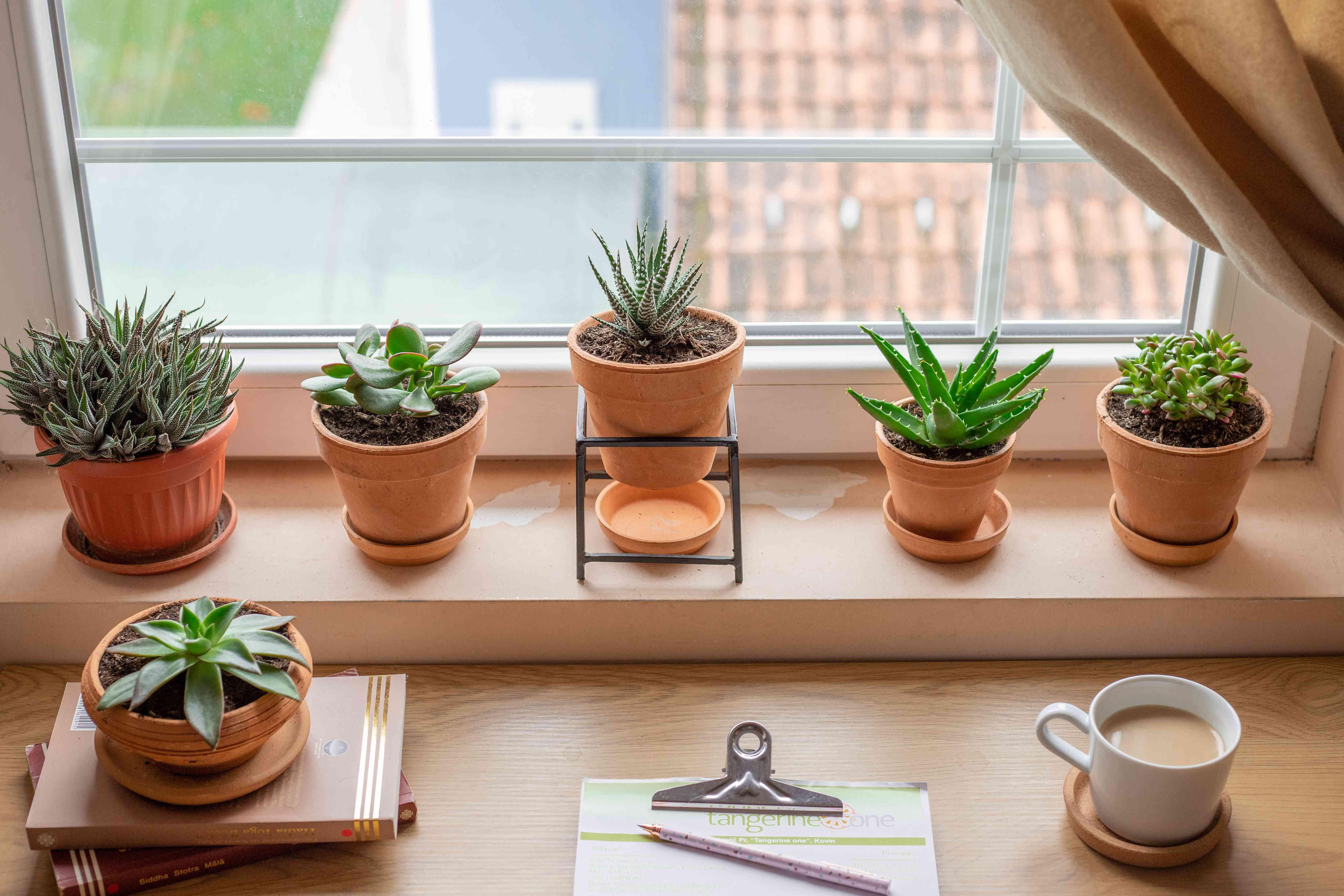 row of succulents next to open window cup of coffee