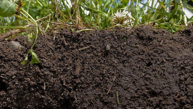 La comida local no es suficiente. Necesitamos una agricultura resiliente.