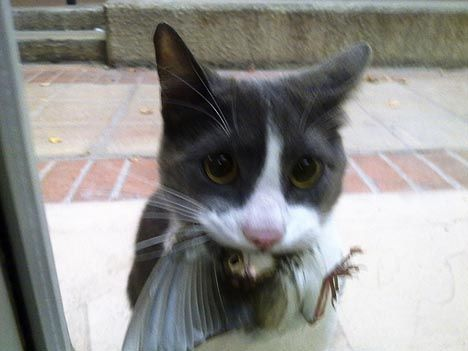 cat with bird in it's mouth waiting to come inside