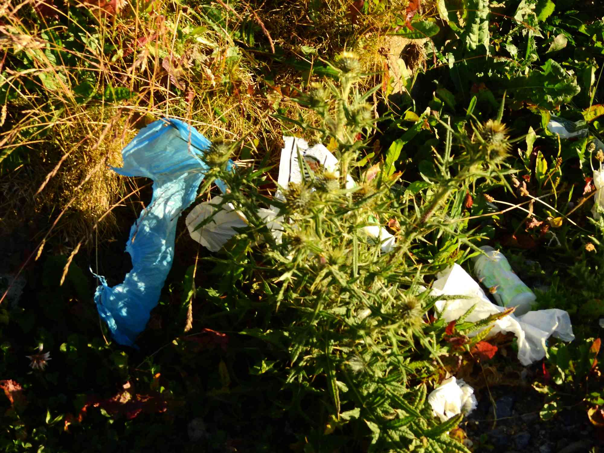 Garbage and plastics in nature