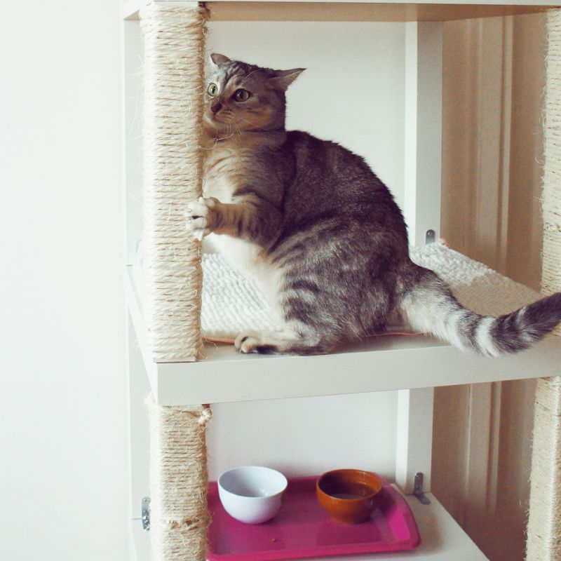 Cat sitting on a homemade cat tree made from end tables