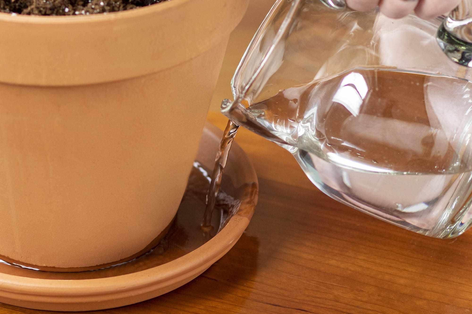 How to Water Houseplants Correctly