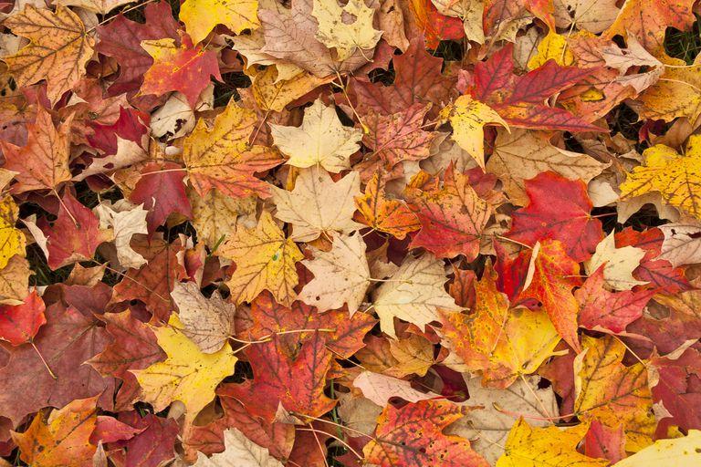 Aprendiendo sobre las hojas