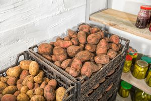Fresh potatoes, carrots, canned vegetables and jars of jam in the new cellar
