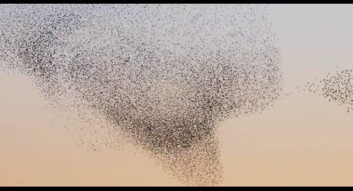 Nature Blows My Mind! 10 Videos of the Stunning, Otherwordly Flights of Starlings