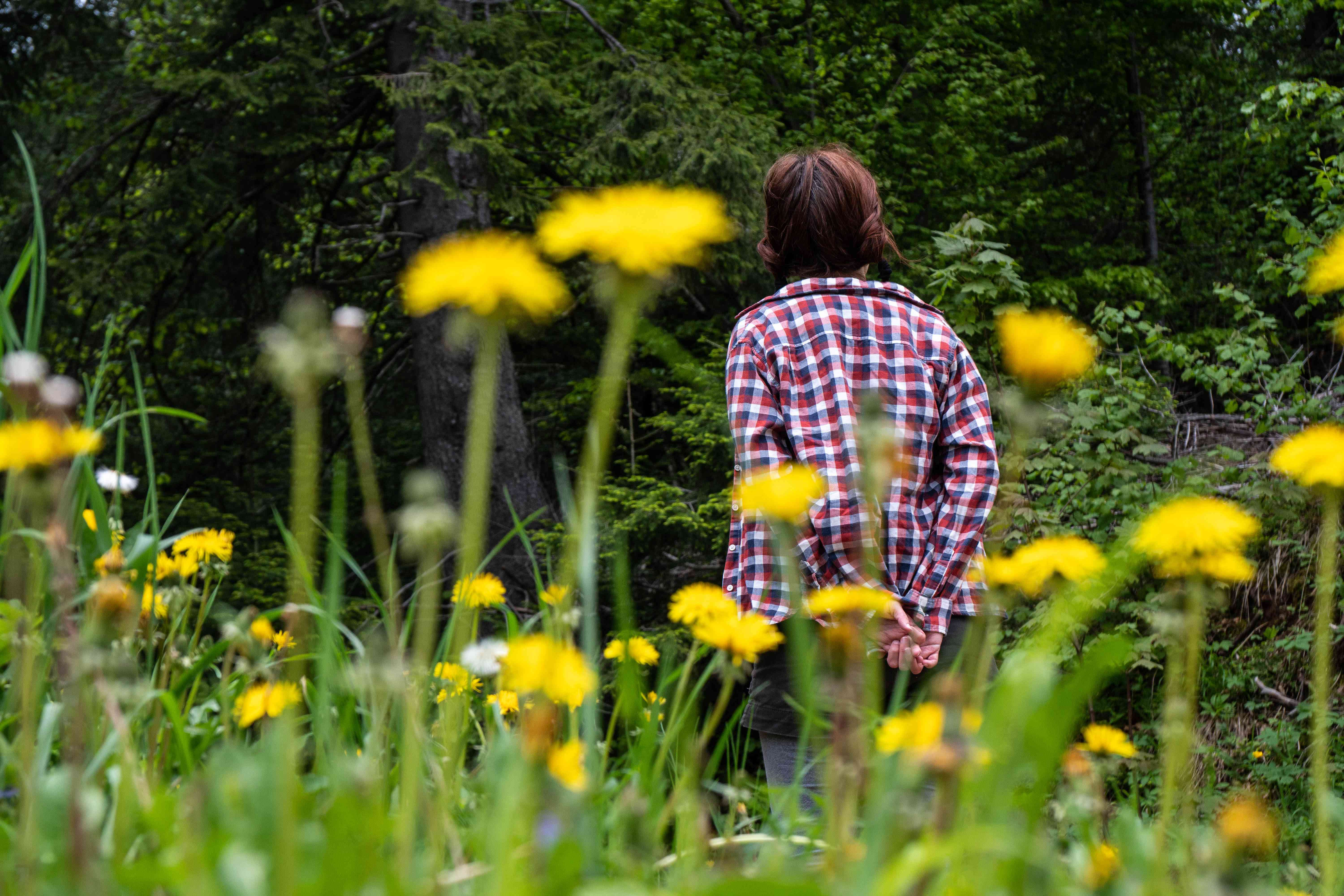 woman wanders through field of yellow flowers in foreground