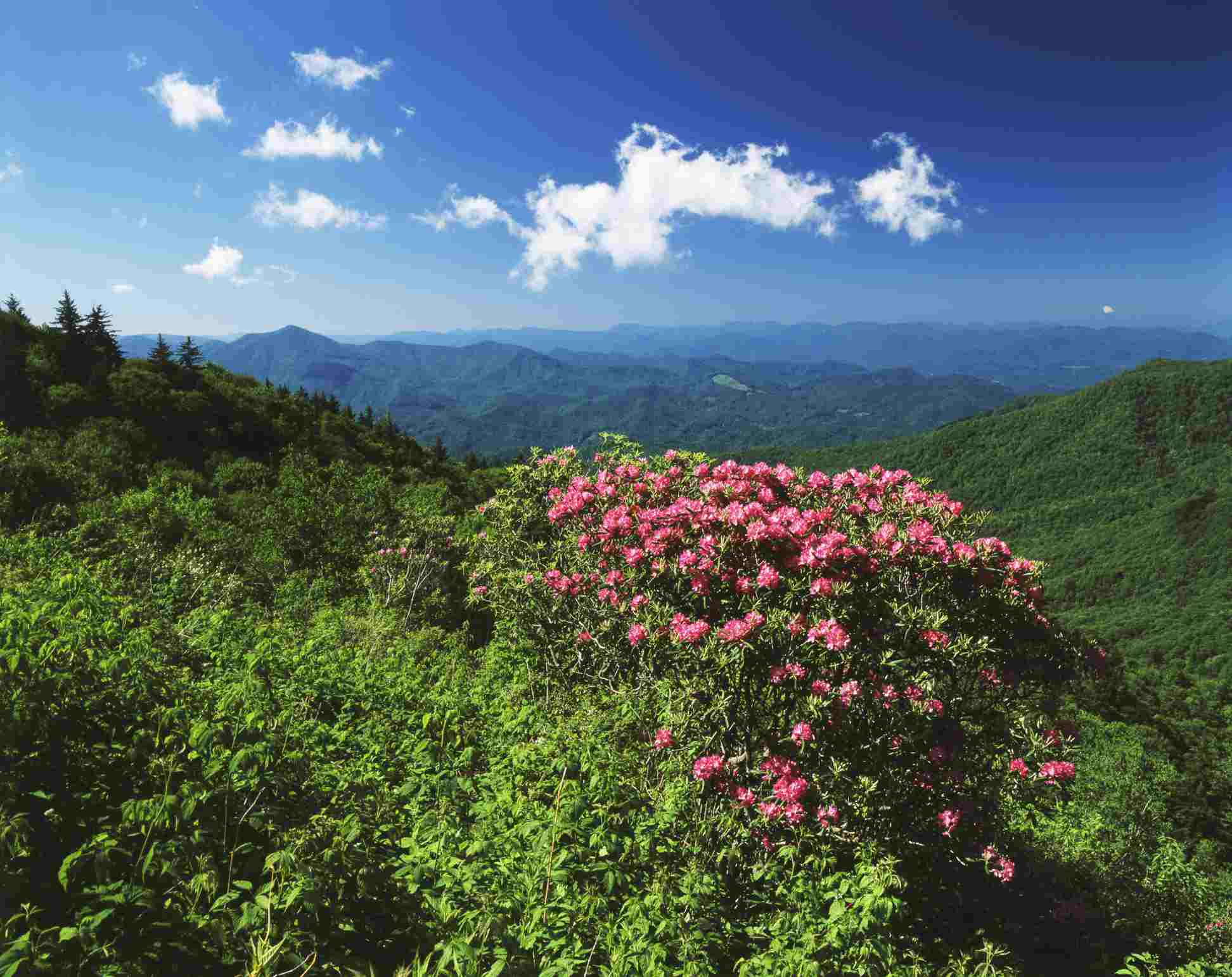 Pisgah National Forest in North Carolina