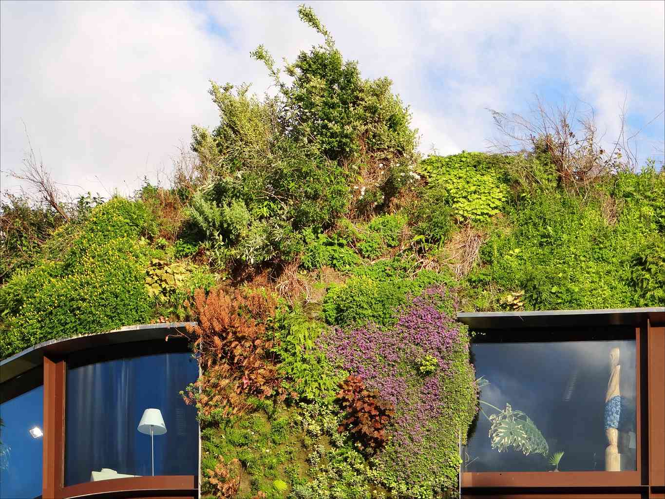 A living wall full of plants on a building.