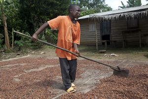 boy works on cocoa farm