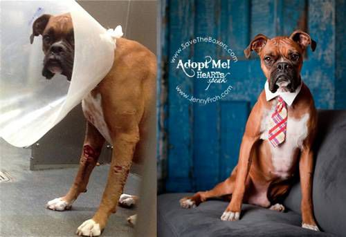 A before and after photo of a rescued dog