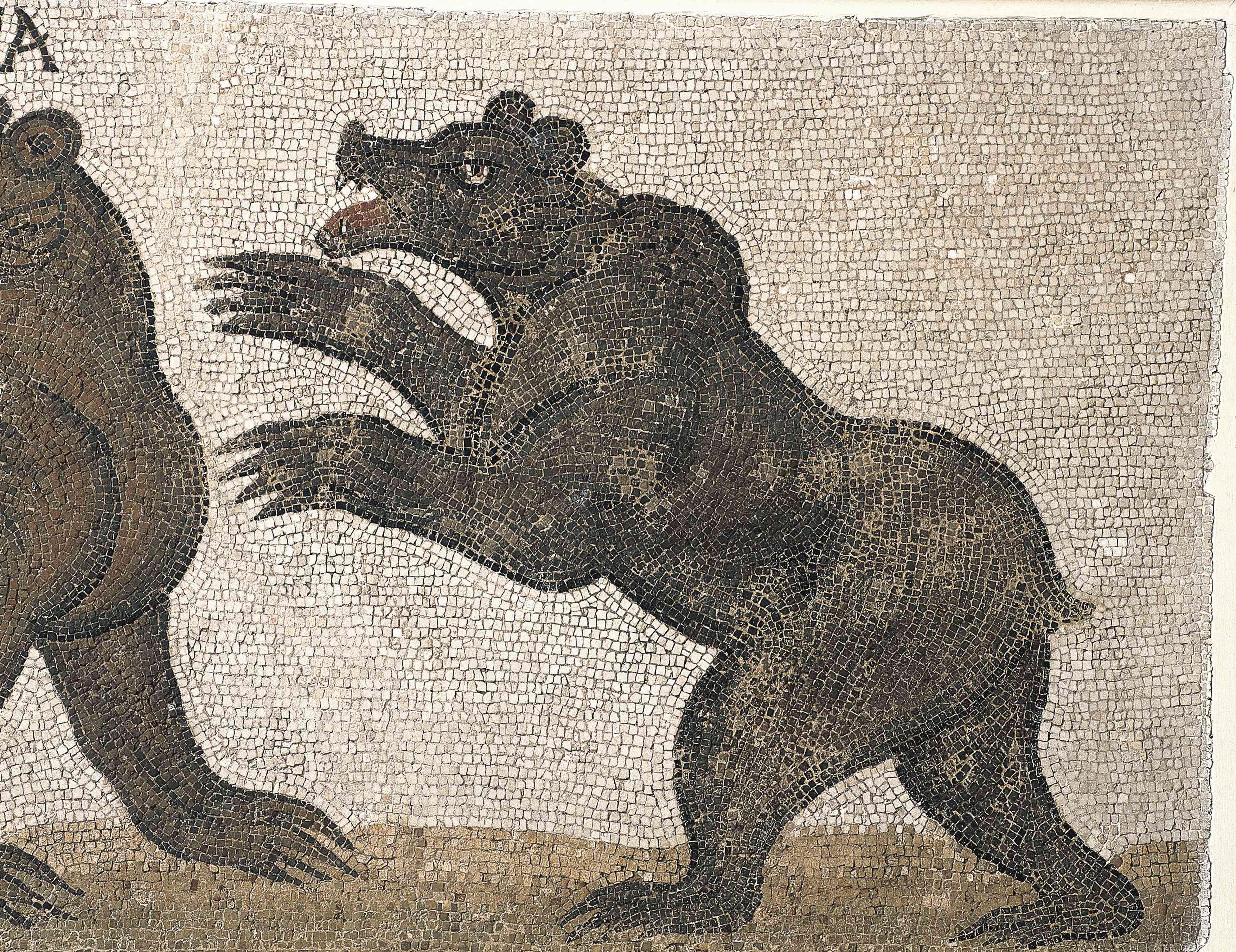 Mosaic depicting an Atlas bear attacking Carthage, Tunisia