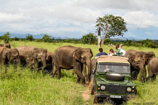 Safari jeep gets too close to elephants
