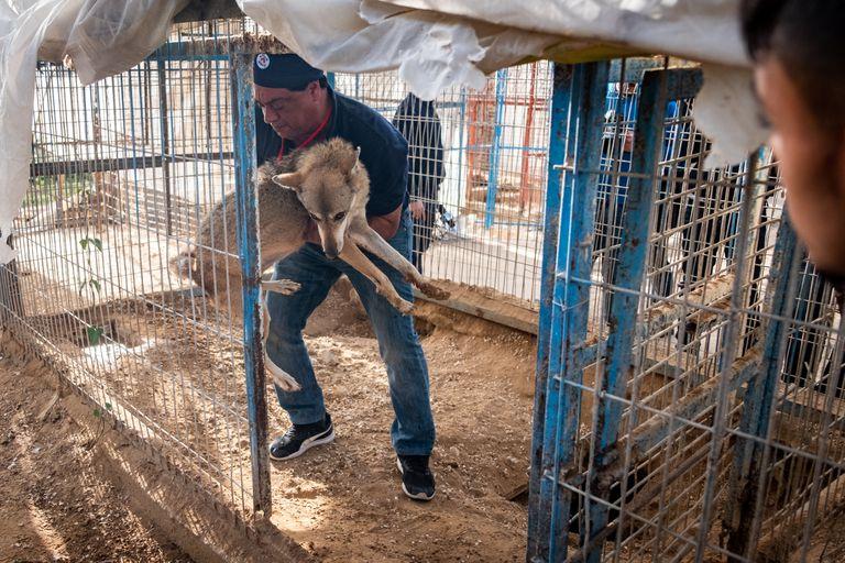 Desafiaron una región devastada por la guerra para rescatar a 47 animales del 'Zoo of Sorrow'