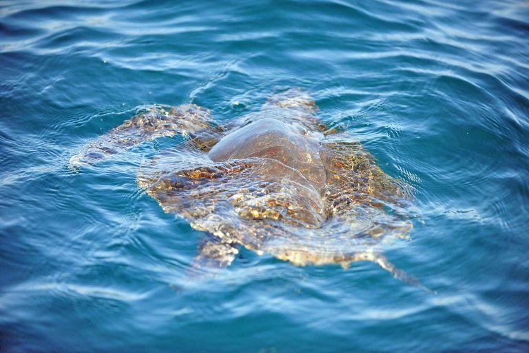 Los drones ayudan a los científicos a monitorear las tortugas marinas en peligro de extinción