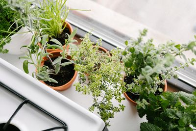 overhead shot of various kitchen herbs in terra cotta pots next to gas stove
