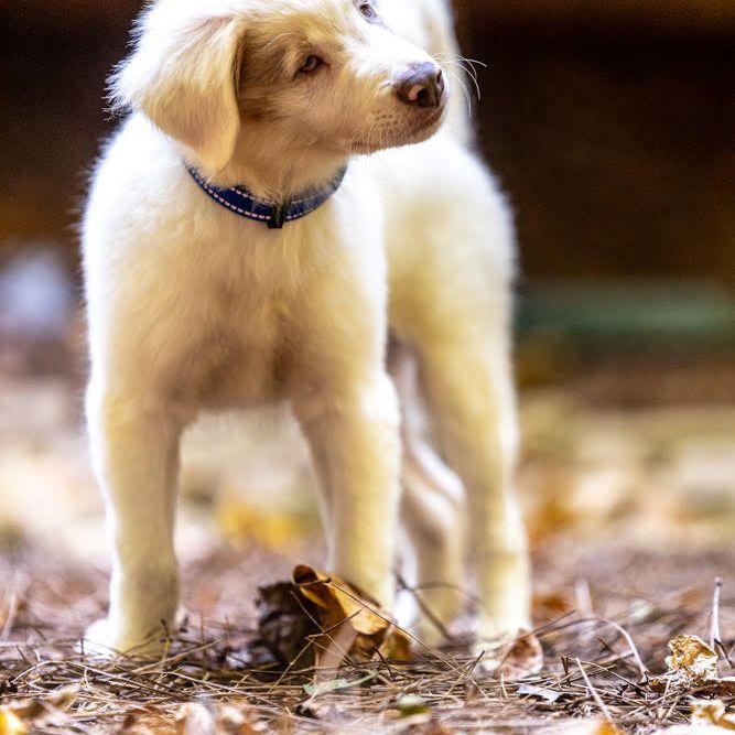 Galen, the blind puppy, tilting his head to hear