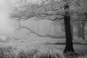 freezing fog landscape in a forest with bare trees covered in ice