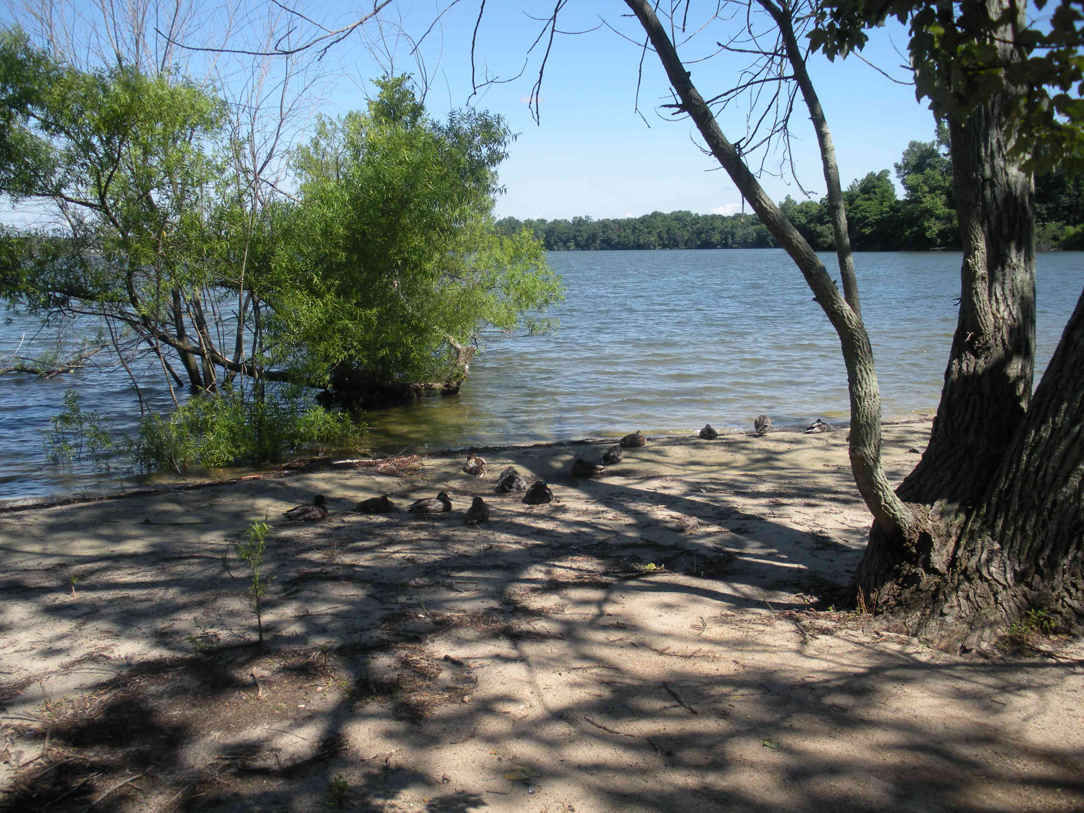 shore of Lake Ronkonkoma with trees in the foreground