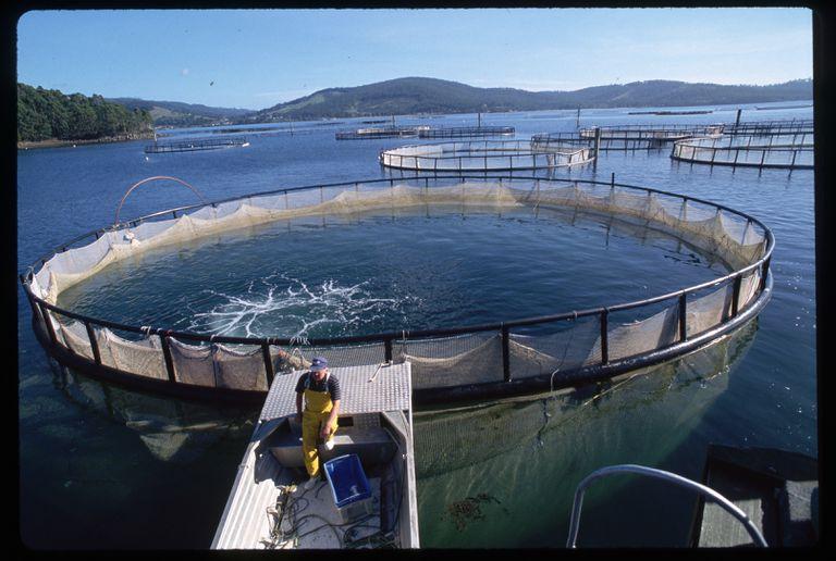 Fish farm aquaculture