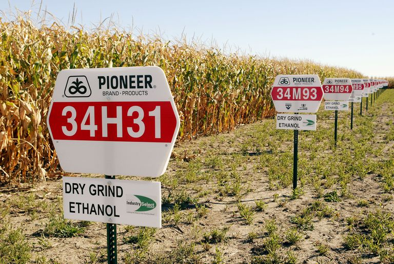 corn planted for ethanol