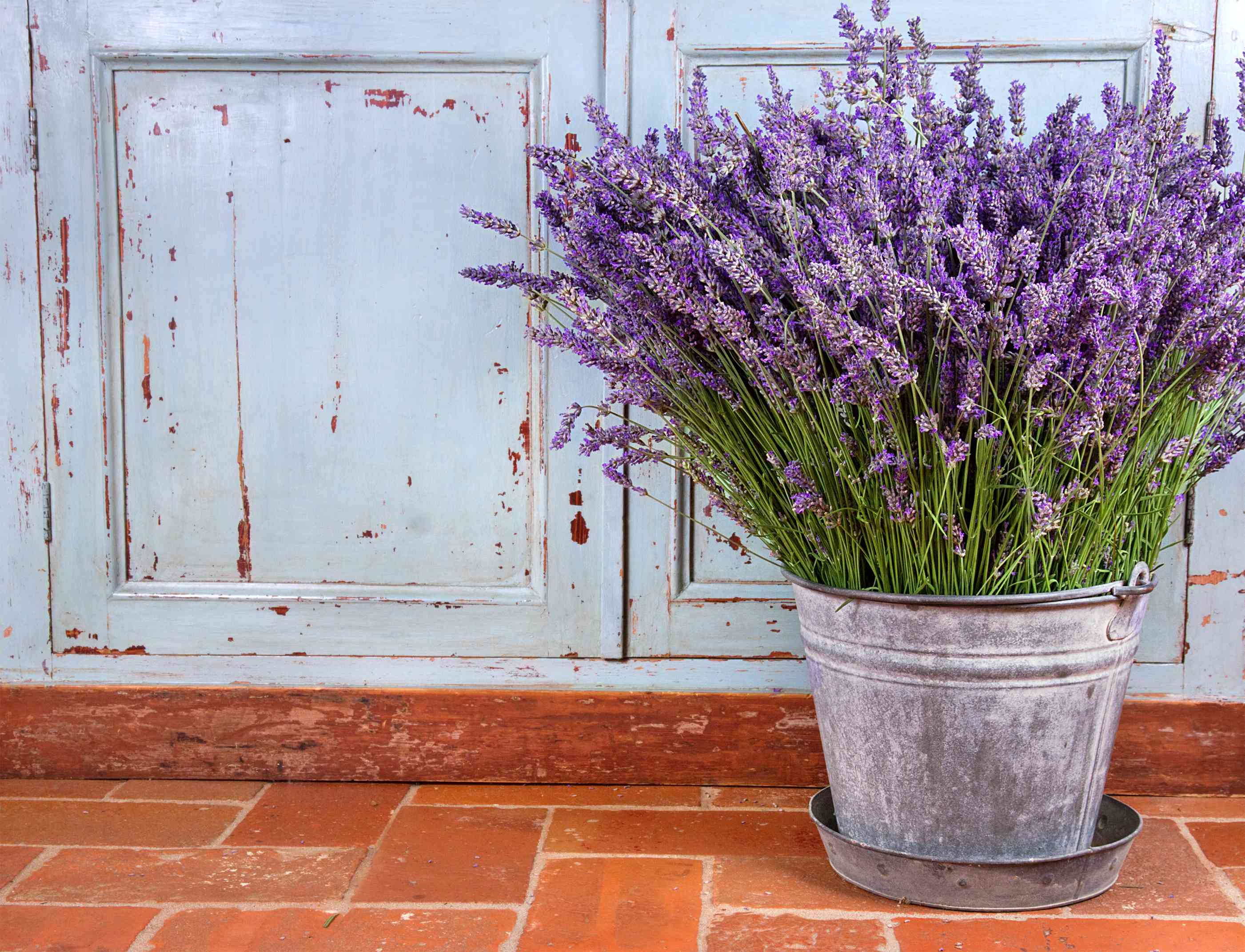 Potted lavender in silver bucket on tiled floor