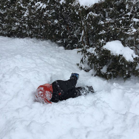 wallowing in snow