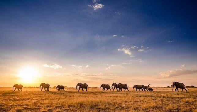 Elephants walk across a sun-drenched savanna