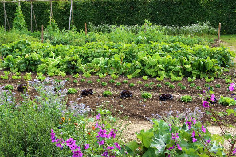 Big backyard vegetable garden