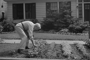Man planting in a front yard Victory Garden.