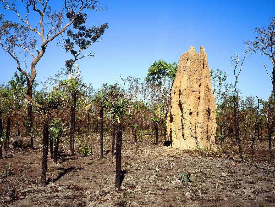 termite mounds photo