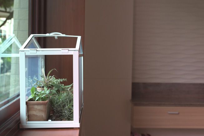 A terrarium box shaped like a house