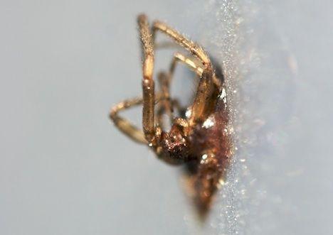 dead bug photo