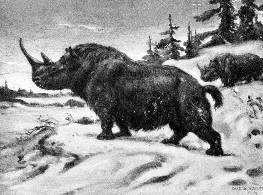 a drawing of two rhinoceros type animals with hairy coats and squirrel like tails on a snowy background