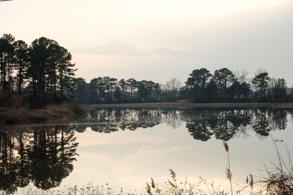 A wetland scene along the Delmarva Peninsula