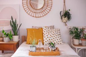 variety of houseplants in a bedroom grouped on chair and nightstand