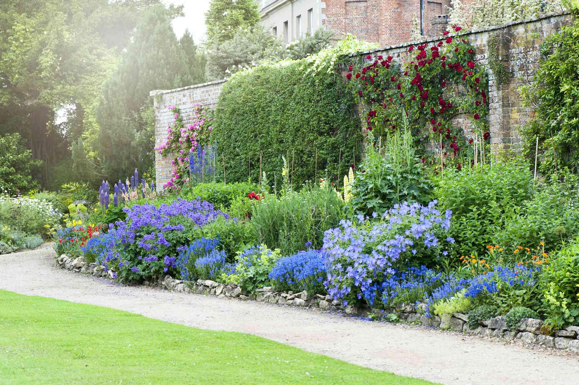 herbaceous flower border