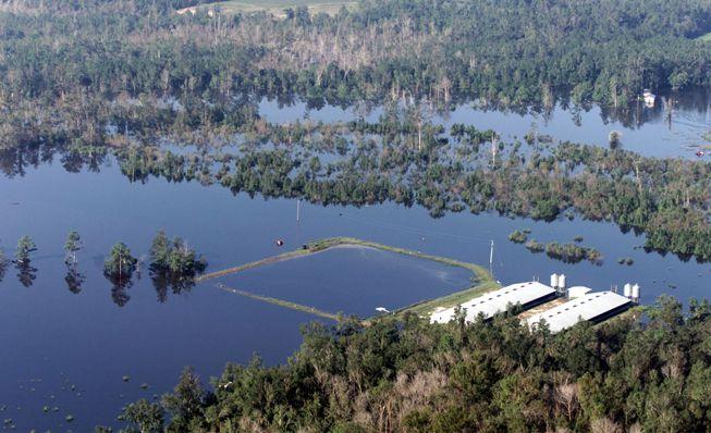 Las inundaciones del huracán Florence provocan el desbordamiento de las lagunas de desechos de cerdos
