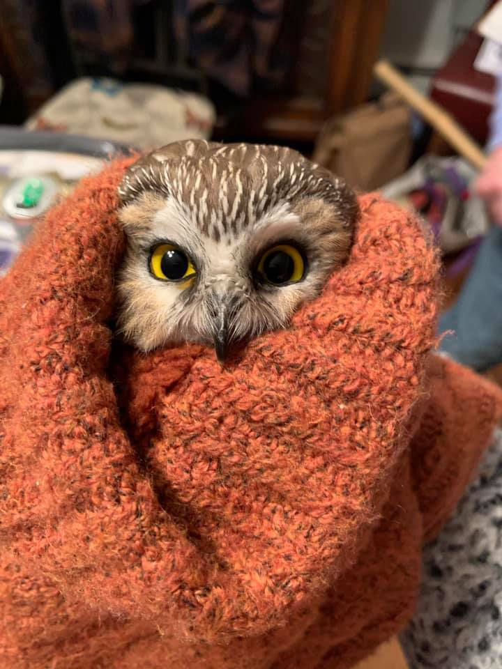 owl wrapped in scarf