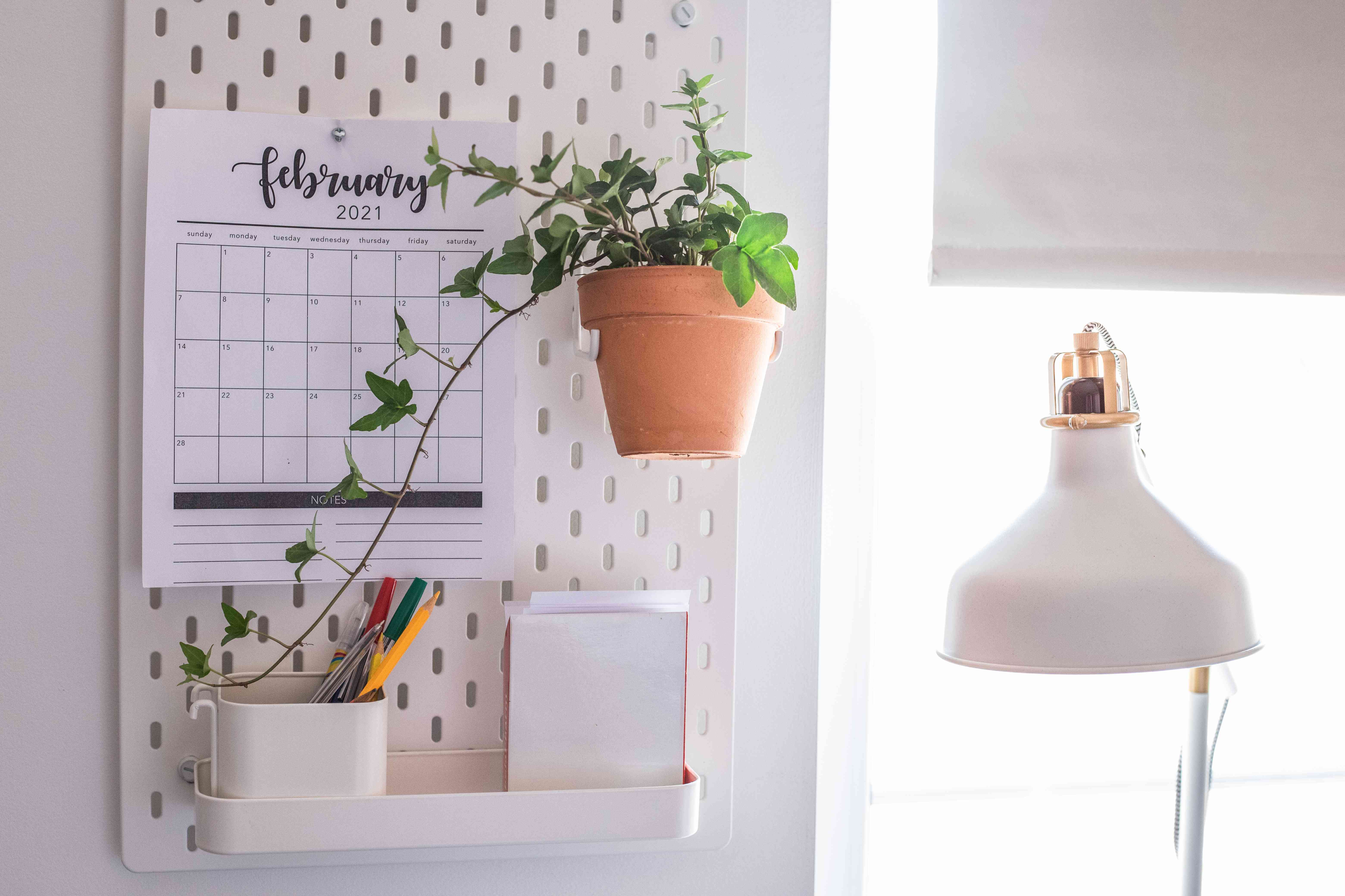 english ivy plant with trailing leaves in all-white office setting