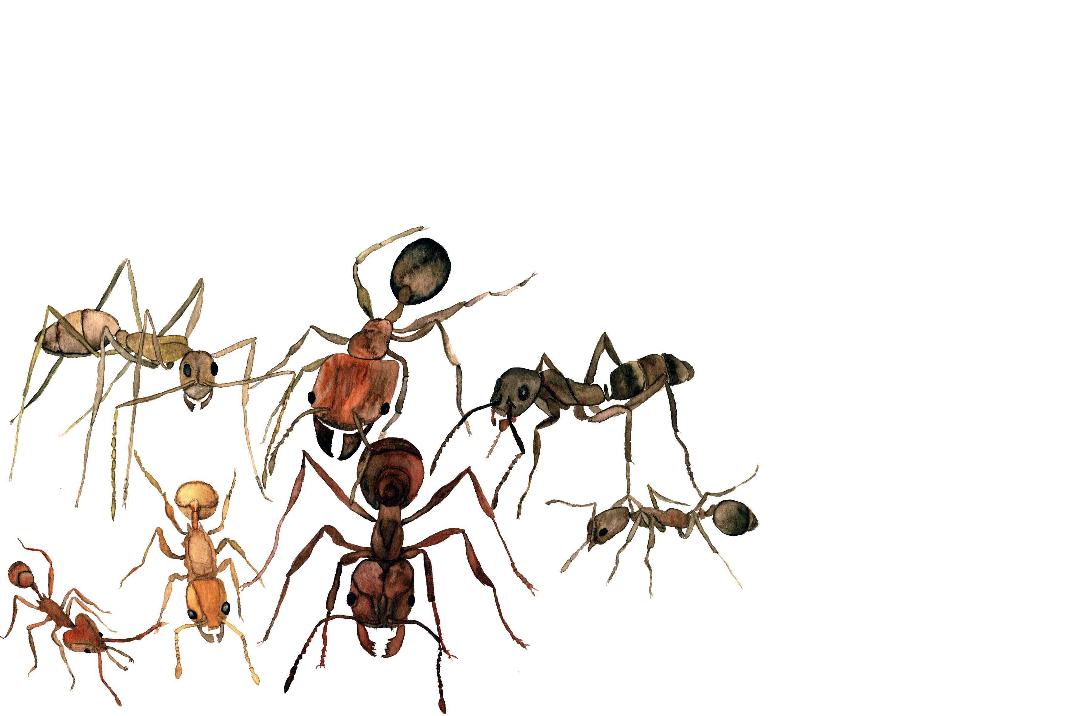 ants watercolor
